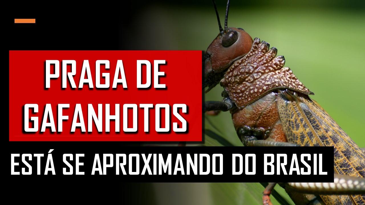 praga de gafanhotos no brasil, praga de gafanhotos, fim dos tempos, volta de cristo, APOCALIPSE